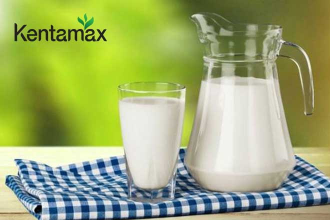 Sữa tươi, sữa đặc hỗ trợ tăng cân hiệu quả