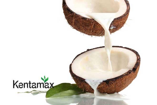 Sữa dừa là thức uống giúp tăng cân hiệu quả cho người gầy
