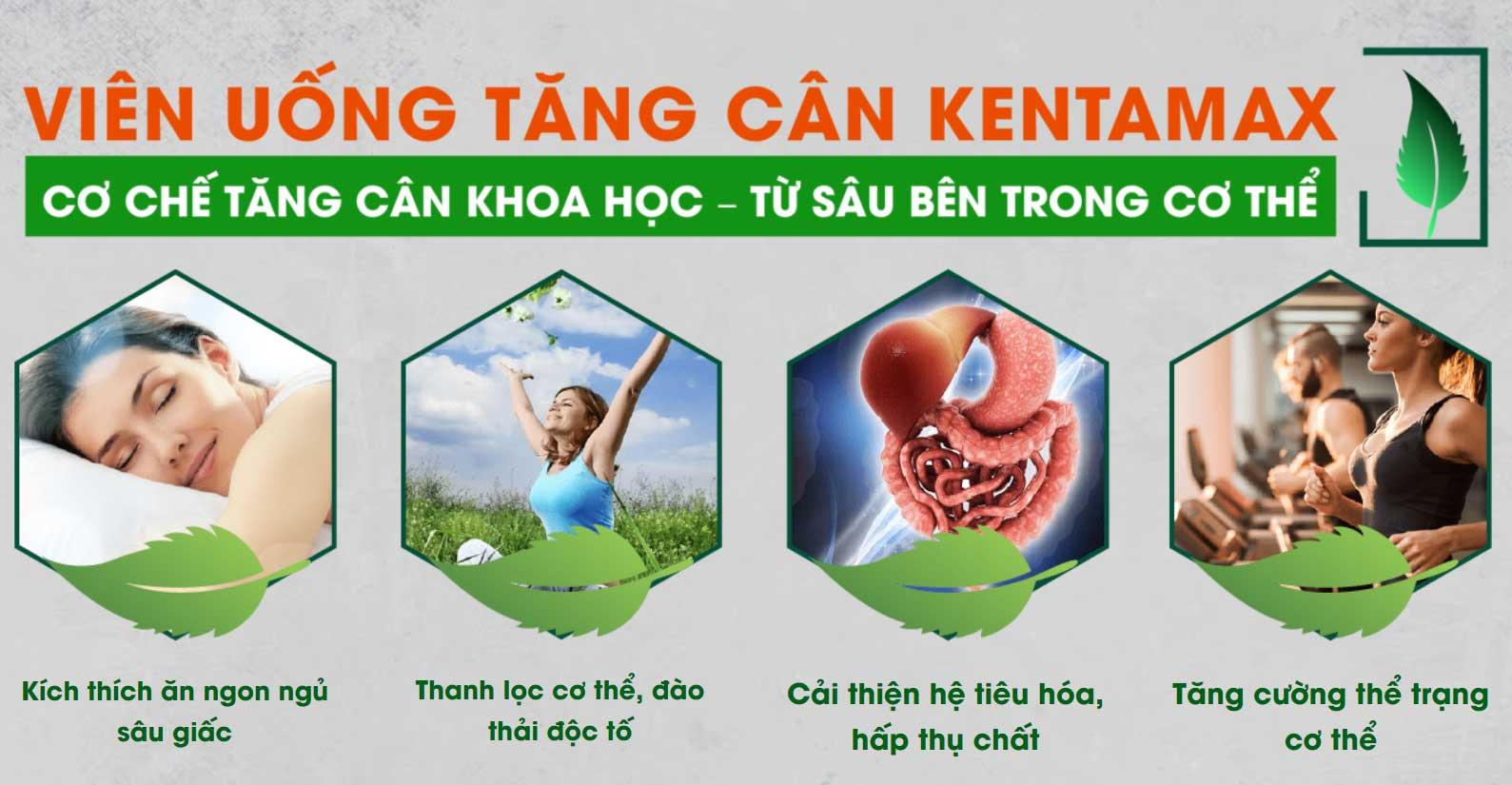 Cơ chế tác động của viên uống tăng cân Kentamax